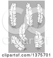 Clipart Of Black And White Feathers On Gray Royalty Free Vector Illustration