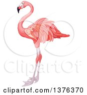 Clipart Of A Pink Flamingo Bird In Profile Royalty Free Vector Illustration