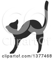 Black Silhouetted Cat Stretching