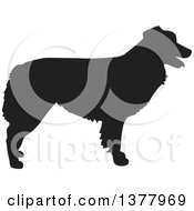 Clipart Of A Black Silhouetted Australian Shepherd Dog In Profile Royalty Free Vector Illustration