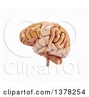 Clipart Of A 3d Human Brain On A White Background Royalty Free Illustration