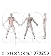 Clipart Of A 3d Anatomical Men Shown With Visible External Oblique Muscles Back Side And In Profile On A White Background Royalty Free Illustration