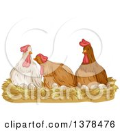 Group Of Hens Laying Eggs