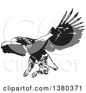 Black And White Flying Eagle Ready To Grab Prey
