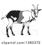 Clipart Of A Black And White Goat Royalty Free Vector Illustration