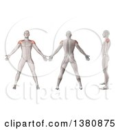 Clipart Of 3d Anatomical Men Shown With Visible Deltoid Muscles Front Side Back Side And In Profile On A White Background Royalty Free Illustration