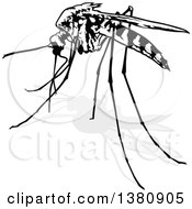 Black And White Mosquito And Gray Shadow