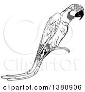 Clipart Of A Black And White Perched Macaw Parrot Royalty Free Vector Illustration by dero