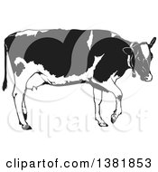 Clipart Of A Grayscale Walking Dairy Cow Royalty Free Vector Illustration by dero