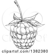 Clipart Of A Gray Sketched Blackberry Or Raspberry Royalty Free Vector Illustration