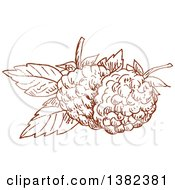 Clipart Of Brown Sketched Blackberries Or Raspberries Royalty Free Vector Illustration