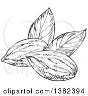 Clipart Of Black And White Sketched Almonds Royalty Free Vector Illustration by Vector Tradition SM
