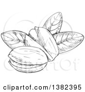 Clipart Of Black And White Sketched Pistachios Royalty Free Vector Illustration by Vector Tradition SM