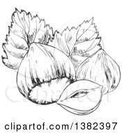 Clipart Of Black And White Sketched Hazelnuts Royalty Free Vector Illustration by Vector Tradition SM