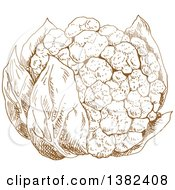 Clipart Of A Brown Sketched Head Of Cauliflower Royalty Free Vector Illustration