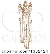 Brown Sketched Asparagus