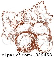 Clipart Of Brown Sketched Gooseberries Royalty Free Vector Illustration