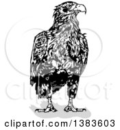 Black And White Eagle And Shadow