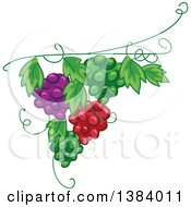 Clipart Of A Green Red And Purple Grape Vine Design Element Royalty Free Vector Illustration