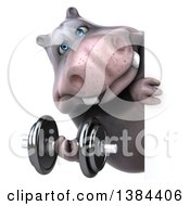 Clipart Of A 3d Henry Hippo Character Working Out With A Dumbbell Around A Sign On A White Background Royalty Free Illustration