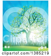 Clipart Of A Green Silhouetted Tree Leafing Out In A Spring Time Landscape With Sunshine Royalty Free Vector Illustration