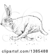 Clipart Of A Black And White Bunny Rabbit Royalty Free Vector Illustration by lineartestpilot