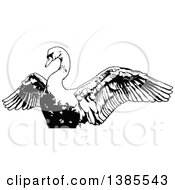 Clipart Of A Black And White Swan Flapping Its Wings Royalty Free Vector Illustration