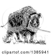 Clipart Of A Black And White Wild Boar Pig Biting A Sword Royalty Free Vector Illustration by lineartestpilot