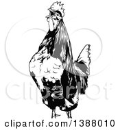 Clipart Of A Cropped Black And White Rooster Crowing Royalty Free Vector Illustration by dero