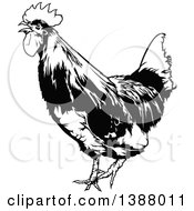 Clipart Of A Black And White Rooster Royalty Free Vector Illustration by dero