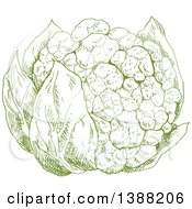 Clipart Of A Sketched Green Head Of Cauliflower Royalty Free Vector Illustration