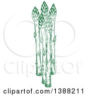 Clipart Of Sketched Green Asparagus Stalks Royalty Free Vector Illustration by Vector Tradition SM