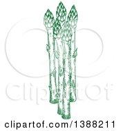 Sketched Green Asparagus Stalks