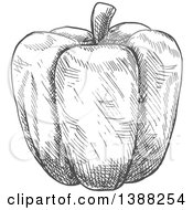 Clipart Of A Sketched Gray Bell Pepper Royalty Free Vector Illustration