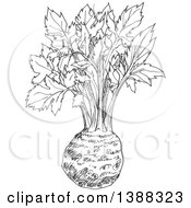 Clipart Of A Sketched Gray Celery Root Royalty Free Vector Illustration