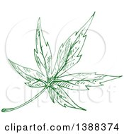 Sketched Green Maple Leaf