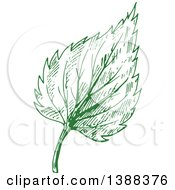 Clipart Of A Green Sketched Birch Leaf Royalty Free Vector Illustration