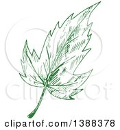 Green Sketched Maple Leaf