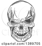 Clipart Of A Gray Sketched Human Skull Royalty Free Vector Illustration
