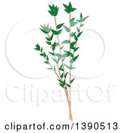 Clipart Of A Culinary Spice Herb Thyme Royalty Free Vector Illustration