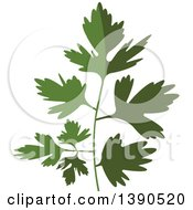 Clipart Of A Culinary Spice Herb Parsley Royalty Free Vector Illustration