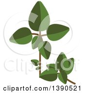 Clipart Of A Culinary Spice Herb Oregano Royalty Free Vector Illustration