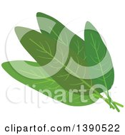Clipart Of A Culinary Spice Herb Sage Royalty Free Vector Illustration