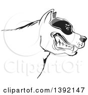 Poster, Art Print Of Tough Snarling Black And White Pit Bull Dog Head In Profile