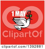 Clipart Of A Dove Flying With A Red Tulip With 1 May Text On Red Royalty Free Vector Illustration by elena
