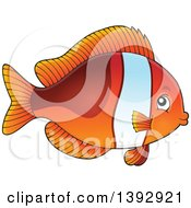 Clipart Of A Clownfish Marine Fish Royalty Free Vector Illustration
