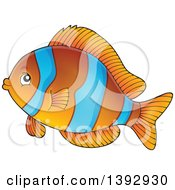 Clipart Of A Clownfish Marine Fish Royalty Free Vector Illustration by visekart