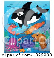 Clipart Of A Killer Whale Orca And Sea Creatures Royalty Free Vector Illustration by visekart
