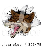 Clipart Of A Vicious Coyote Mascot Head Breaking Through A Wall Royalty Free Vector Illustration by AtStockIllustration