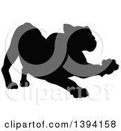 Clipart Of A Black Silhouetted Lioness Stretching Royalty Free Vector Illustration by AtStockIllustration